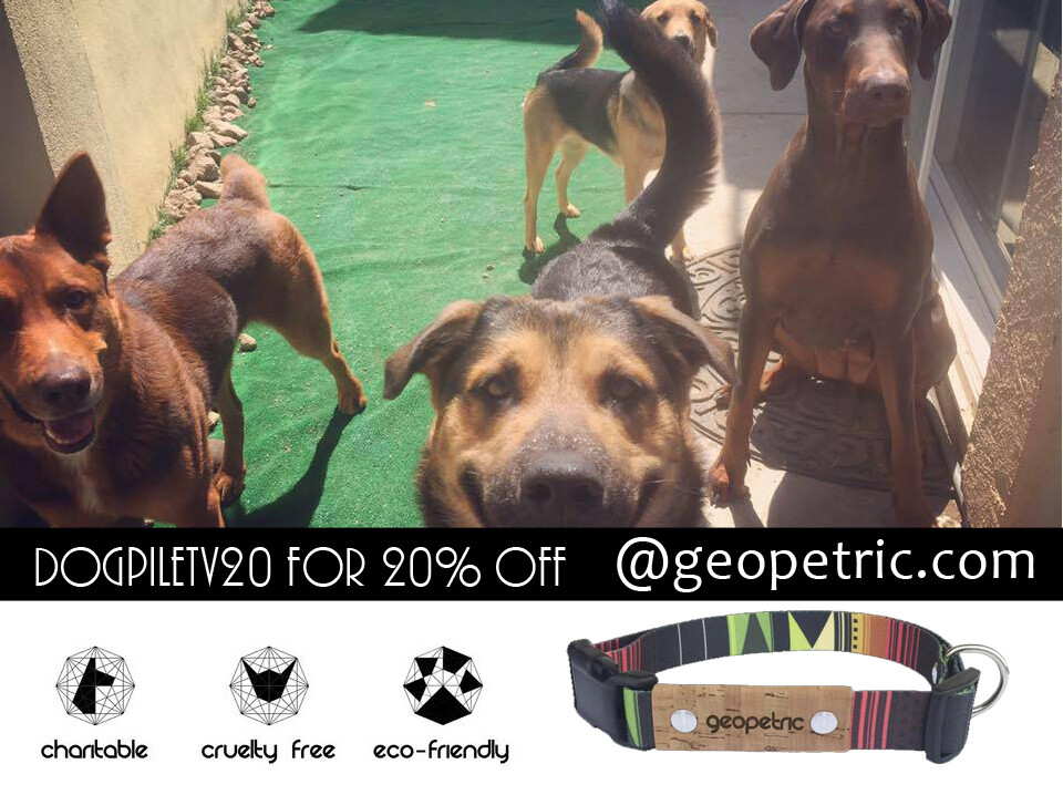 Geopetric Affiliate Partnership & 20% Discount!