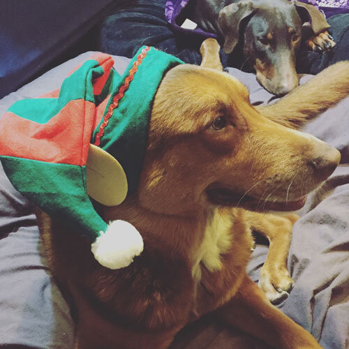 DIY Santa Hats for Dogs
