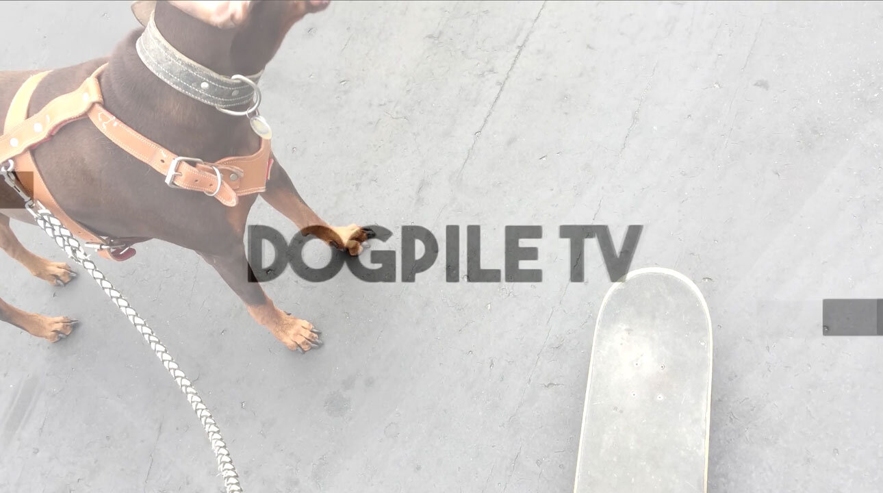 Skateboard with your Dog | Tips & Life Hacks